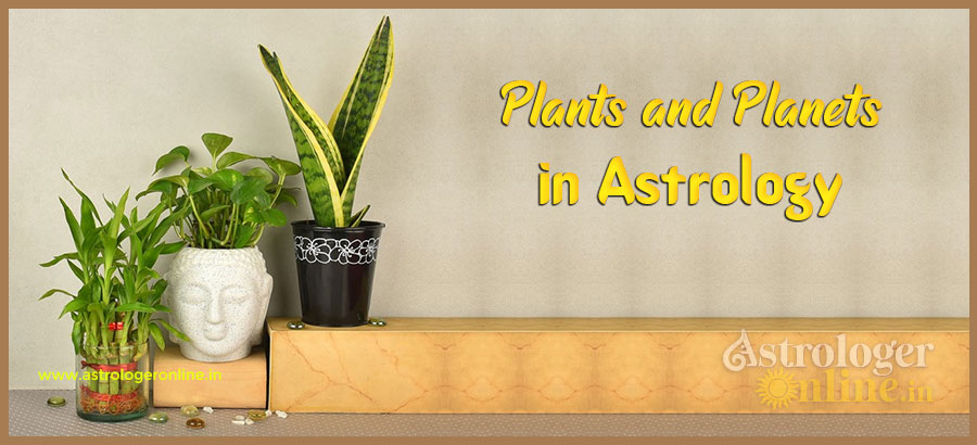 Plants and Planets In Astrology